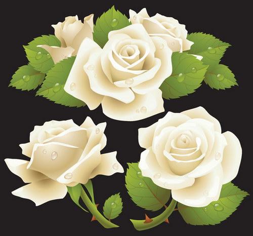 红玫瑰黄玫瑰白玫瑰