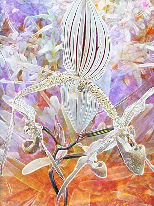 现代抽象画花卉